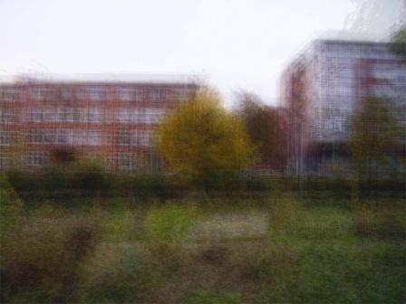 Tuin-080215-090827 - © Frans Verschoor