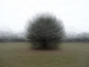 360° - Hoge Veluwe - © Frans Verschoor°