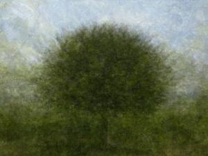 360° - Vogezen - © Frans Verschoor