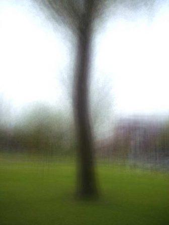 Routines - Tree - © Frans Verschoor