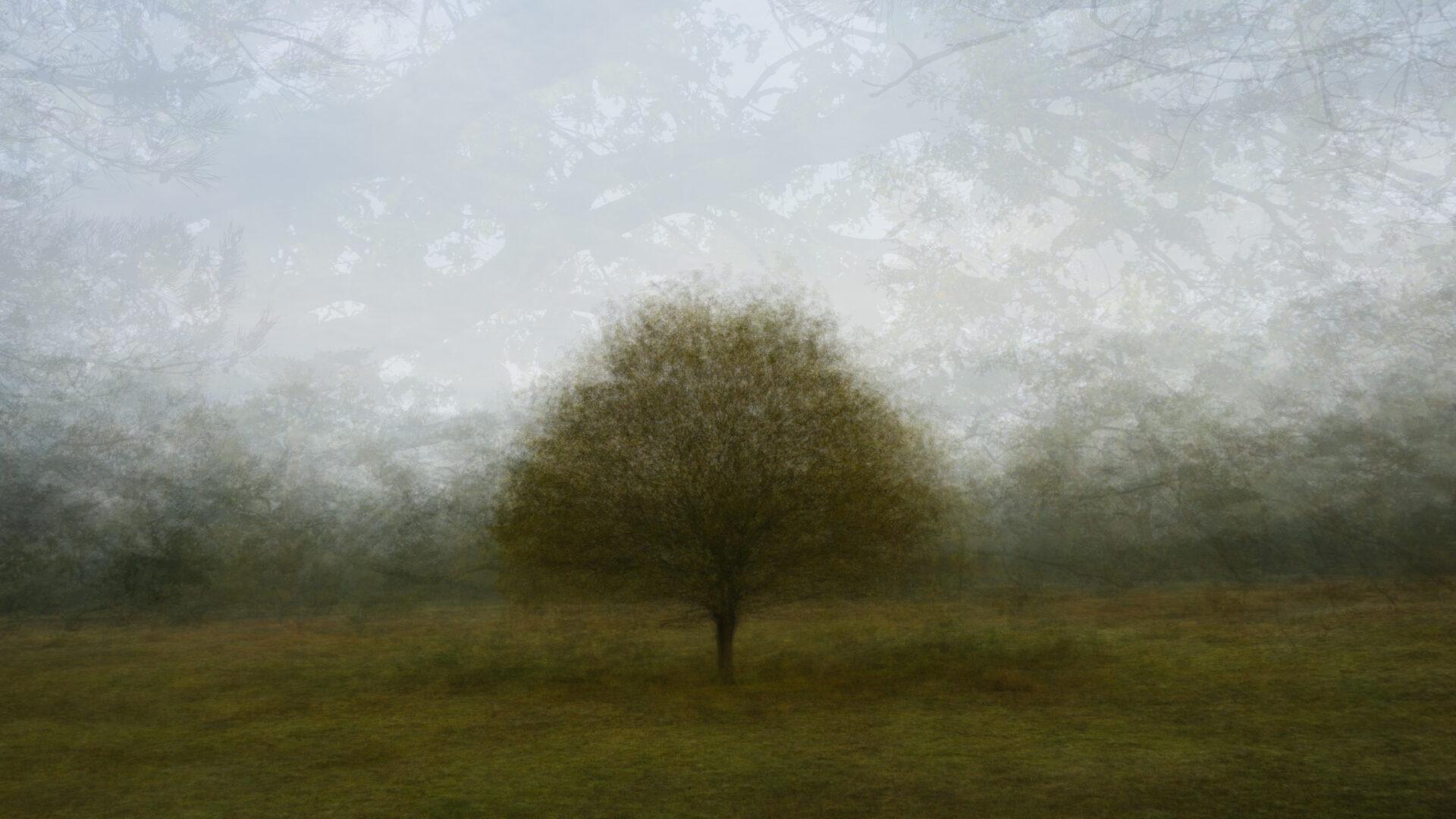 360° - Hoge Ginkel - © Frans Verschoor